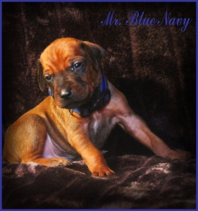 mr blue navy