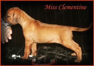 miss clementine