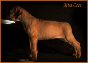 miss ocre