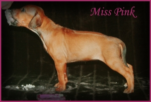 miss pink