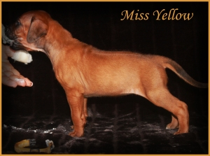 miss yellow
