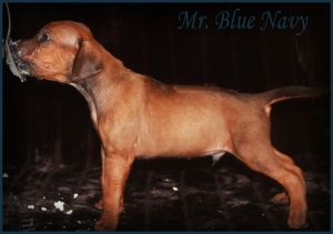 mr blue navy