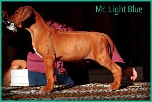 mr light blue