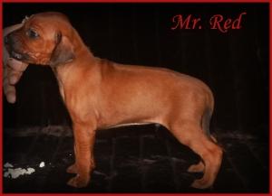 mr red
