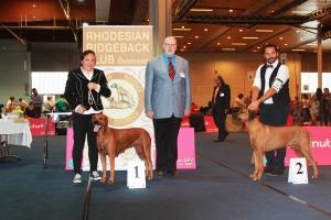 BOB klagenfurt 2014 judge