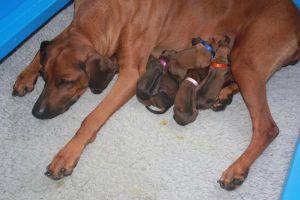 puppies 3